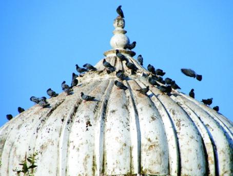 Ravindra Kumar Tanwar Darbar-Pushkar