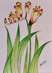 Shalini Goyal Floral-5 Water Colour on Hand Made Paper 14x12 Inch Rs 1250
