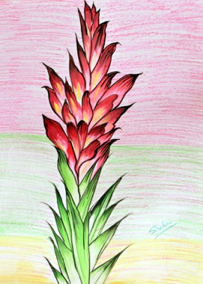 Shalini Goyal Floral-7 Water Colour on Hand Made Paper 14x12 Inch Rs 1250